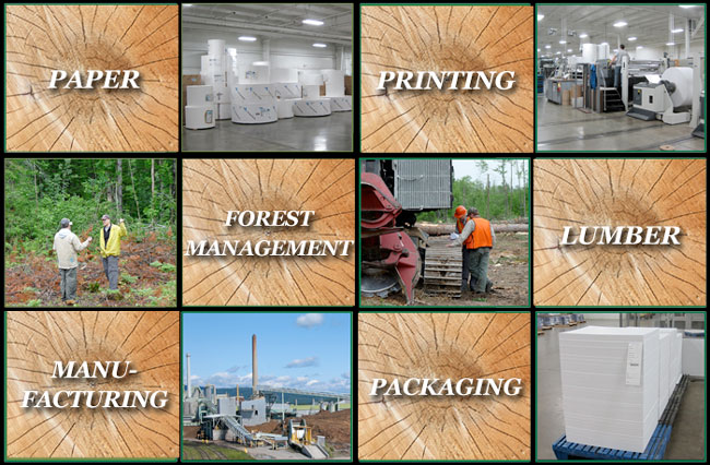 Forest management and green certifications